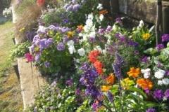 Le parterre de fleurs