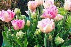 Les fleurs 2