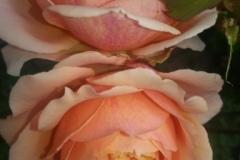 Les fleurs 7